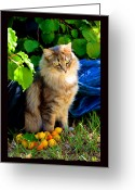Apricots Photo Greeting Cards - Apricots and Silk Greeting Card by Susanne Still