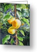 Apricot Painting Greeting Cards - Apricots in the Garden Greeting Card by Irina Sztukowski