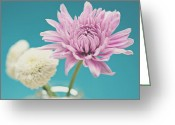 Flower Photograph Greeting Cards - Aqua and Cream Greeting Card by Nastasia Cook