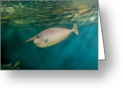 Tropical City Prints Greeting Cards - Aquarium 18 Greeting Card by Joyce StJames