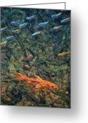 Aquarium Painting Greeting Cards - Aquarium 2 Greeting Card by James W Johnson