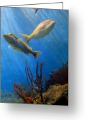 Tropical City Prints Greeting Cards - Aquarium 20 Greeting Card by Joyce StJames