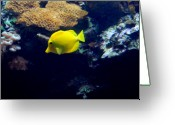 Tropical City Prints Greeting Cards - Aquarium 21 Greeting Card by Joyce StJames