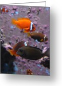 Tropical City Prints Greeting Cards - Aquarium 24 Greeting Card by Joyce StJames