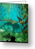 Tropical City Prints Greeting Cards - Aquarium 25 Greeting Card by Joyce StJames
