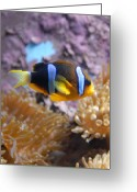 Tropical City Prints Greeting Cards - Aquarium 27 Greeting Card by Joyce StJames
