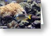 Tropical City Prints Greeting Cards - Aquarium 28 Greeting Card by Joyce StJames