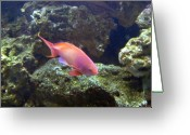 Tropical City Prints Greeting Cards - Aquarium 29 Greeting Card by Joyce StJames