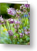 London England  Digital Art Greeting Cards - Aquilegia in Spring Flowers Greeting Card by Donald Davis