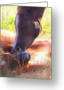 Horse Posters Greeting Cards - Arabian Foals - Peaceful Greeting Card by El Luwanaya Arabians