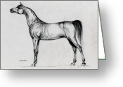Bay Drawings Greeting Cards - Arabian Horse Drawing 34 Greeting Card by Angel  Tarantella