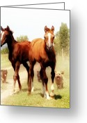 Wild Horse Greeting Cards - Arabian horse foals Greeting Card by El Luwanaya Arabians