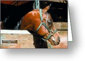 Bay Horse Greeting Card Greeting Cards - Arabian Horse Portriat Greeting Card by Olde Time  Mercantile