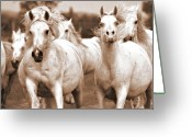 Horse Greeting Cards Greeting Cards - Arabian mares home run Greeting Card by El Luwanaya Arabians