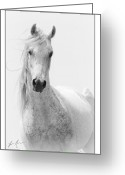 Arabian Photographs Greeting Cards - Arabian Wind Greeting Card by Jamie Mammano