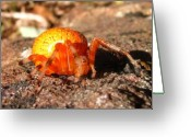 Marbled Orb Weaver Greeting Cards - Araneus Marmoeus Greeting Card by Joshua Bales