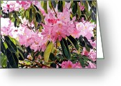 Featured Artist Painting Greeting Cards - Arboretum Rhododendrons Greeting Card by David Lloyd Glover
