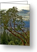 Minard Greeting Cards - Arbutus Trees Greeting Card by Vern Minard