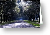 Driveways Greeting Cards - Arch of Oaks Greeting Card by Jim Goldseth