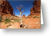Rock Walls Greeting Cards - Arches PArk Avenue Greeting Card by Adam Jewell