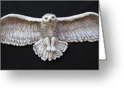 Low Relief Greeting Cards - Arctic Owl Greeting Card by Janet Knocke