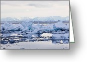 Ice-floe Greeting Cards - Arctic Sea Ice, Canada Greeting Card by Louise Murray