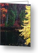 Reds Of Autumn Photo Greeting Cards - Ardent Greeting Card by Cyryn Fyrcyd