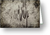 2hivelys Art Greeting Cards - Arizona Desert 2 Greeting Card by Methune Hively