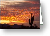 Clouds Posters Greeting Cards - Arizona November Sunrise With Saguaro   Greeting Card by James Bo Insogna