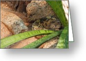 Rattler Digital Art Greeting Cards - Arizona Rattler Greeting Card by Methune Hively