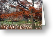 Veterans Greeting Cards - Arlington Cemetery in Fall Greeting Card by Carolyn Marshall