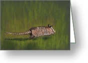 Grass Pastels Greeting Cards - Armadillo Run Greeting Card by Anastasiya Malakhova