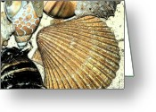 Shells Digital Art Greeting Cards - Art Shell 2 Greeting Card by Stephanie Troxell