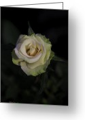 Beauty Love Greeting Cards - Artistic Beauty Of A Rose Greeting Card by Deborah Benoit