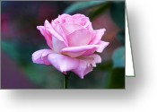 Color Pyrography Greeting Cards - Artistic Pink Rose Greeting Card by Linda Phelps