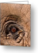 Wildlife Photos Greeting Cards - As High As An Elephants Eye Greeting Card by Skip Willits