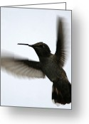 Oregon Wildlife Digital Art Greeting Cards - As She Flies Greeting Card by Holly Ethan