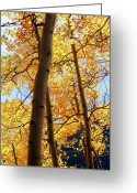 Turning Leaves Greeting Cards - Aspen A Greeting Card by Brian Puyear