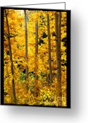 Santa Fe National Forest Greeting Cards - Aspen Family Greeting Card by Susanne Still