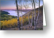 U.s. National Forest Greeting Cards - Aspen Forest Overlooking Fremont Lake Greeting Card by Tim Fitzharris