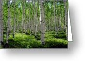 Woods  Greeting Cards - Aspen Glen Greeting Card by The Forests Edge Photography - Diane Sandoval