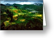 Turning Leaves Greeting Cards - Aspen In Autumn Gold Greeting Card by Richard Delbridge