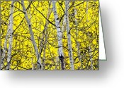 Colorado Mountain Greeting Cards Greeting Cards - Aspen Greeting Card by James Steele