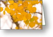 Striking Photography Greeting Cards - Aspen Leaves Greeting Card by James Bo Insogna