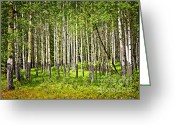 Rockies Greeting Cards - Aspen trees in Banff National park Greeting Card by Elena Elisseeva