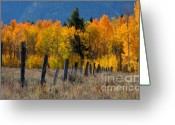 Natures Beauty Greeting Cards - Aspens and Fence Greeting Card by Idaho Scenic Images Linda Lantzy