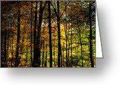 Folage Greeting Cards - Aspens in the Adirondacks Greeting Card by David Patterson