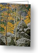 Wall Calendars Greeting Cards - Aspens Rocks and Longs Peak Greeting Card by Brent Parks