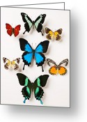 Wings Photo Greeting Cards - Assorted butterflies Greeting Card by Garry Gay
