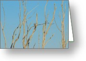 Golden Framed Prints Greeting Cards - Assortment Of Perches - Manasquan Reservoir Greeting Card by Angie McKenzie
